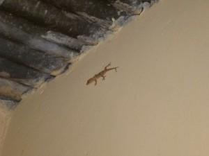 Ein Gecko oder sowas in der Küche. Die Schwerkraft wird überbewertet.